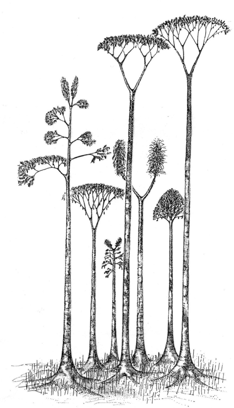 Flore Carbonifère des Alpes Françaises part 1 12617710