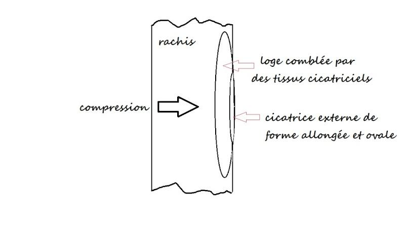 Structures enigmatiques pouvant être des ovipositions  Sans_t12