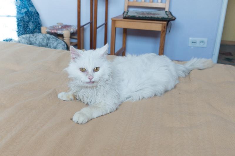 MARIANO 5 ans Europeen blanc angora 250269810591419 Dsc01210