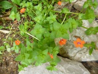 Quelle est le nom de cette plante. P1050413