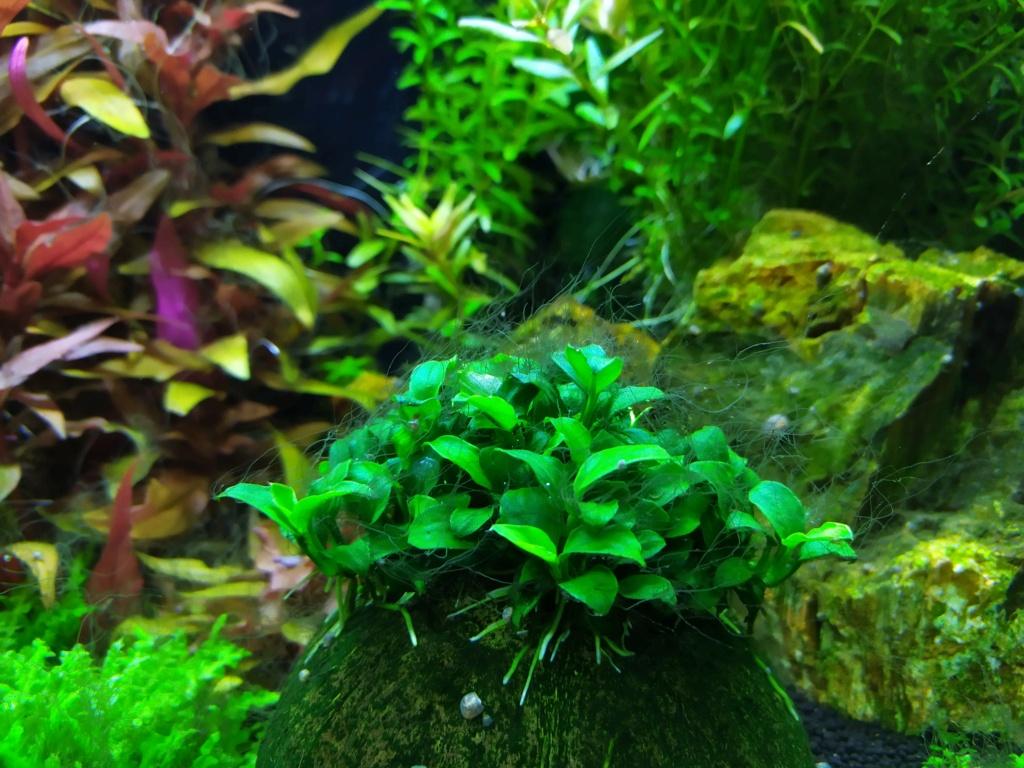 Algues corne de cerf  Img_2066