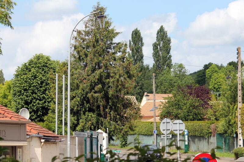 Yvelines (78) Img_6911