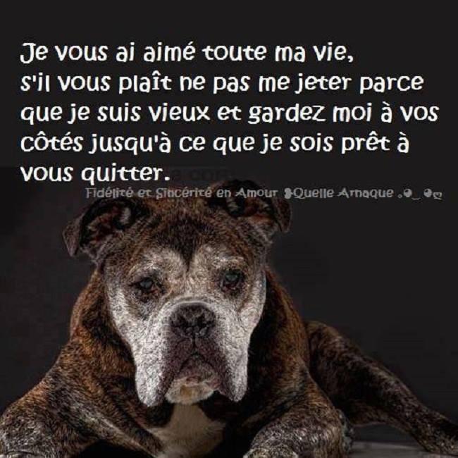 Message de chien 10685510