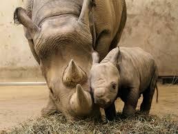 Les mamans et leur bébé 810