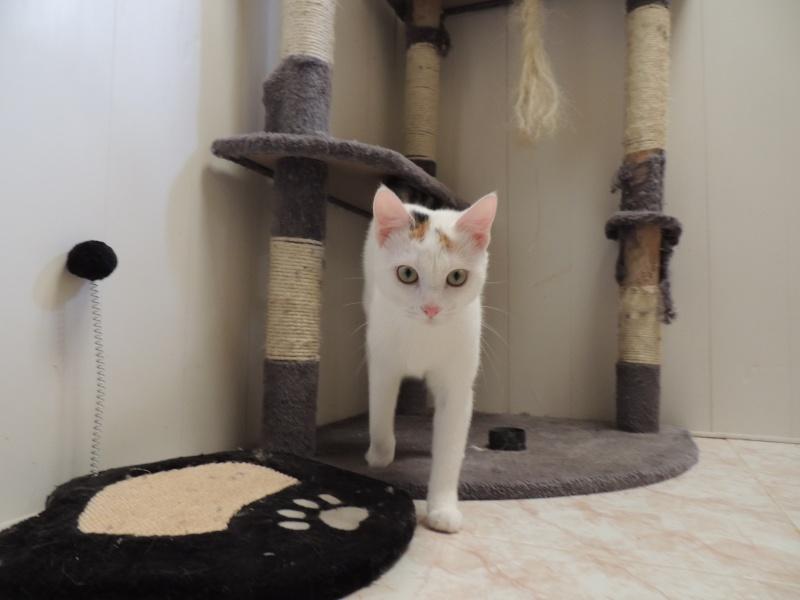 Réservation de LINOTTE et adoption-Avril 2015 Dimanc24