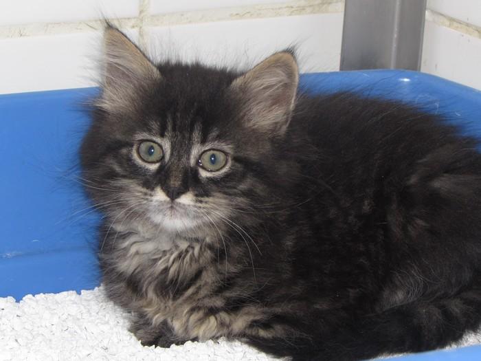 Des nouvelles de Lili chatte Lili_210