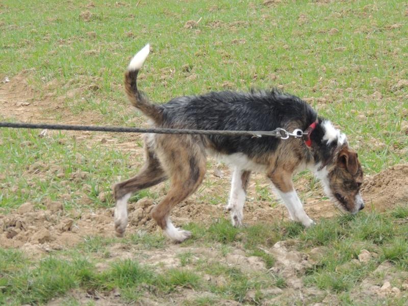 BILL le chien Mercre32