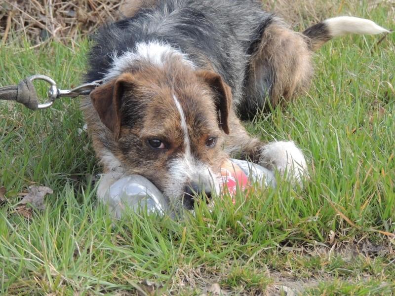 BILL le chien Mercre33