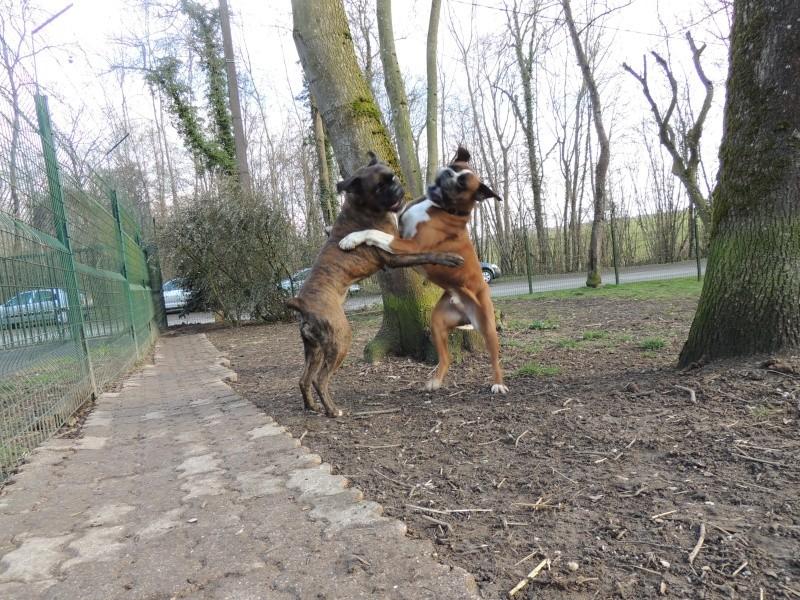 DELZA boxer Mercre39