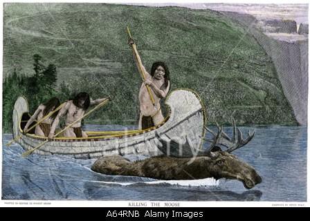L'élan et les pratiques de chasse  Native10
