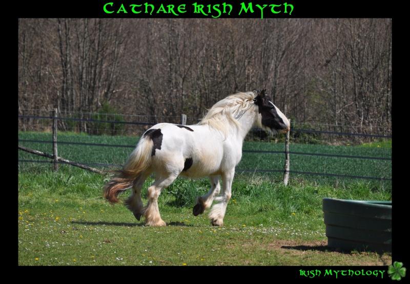 Cathare Irish Myth Dsc_0112