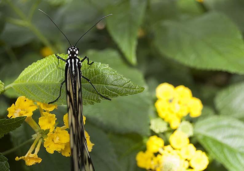 Papillons en liberté 00210