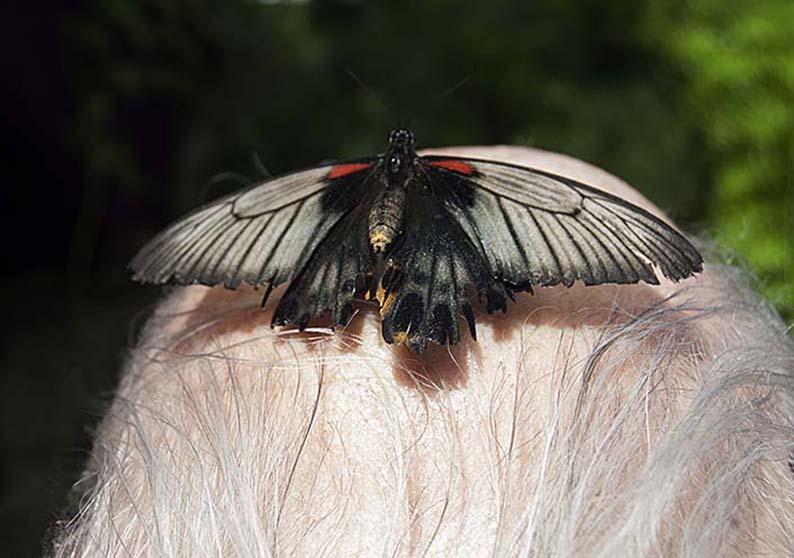 Papillons en liberté 00810