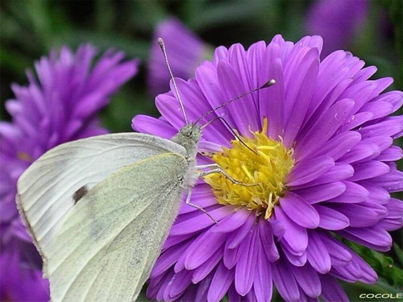 oeil de libellule Imgp1210