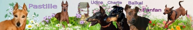 Adoption Loli pinscher de 14 ans en refuge (54) Cimg6210