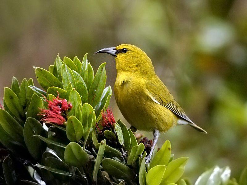 un ptit oiseau - ajonc - 30 mars trouvé par Martin 5756b412