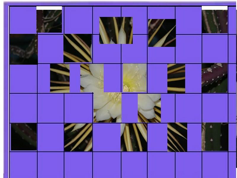 une fleur -ajonc - 6 mai trouvée par Martine - Page 2 Fleur_12