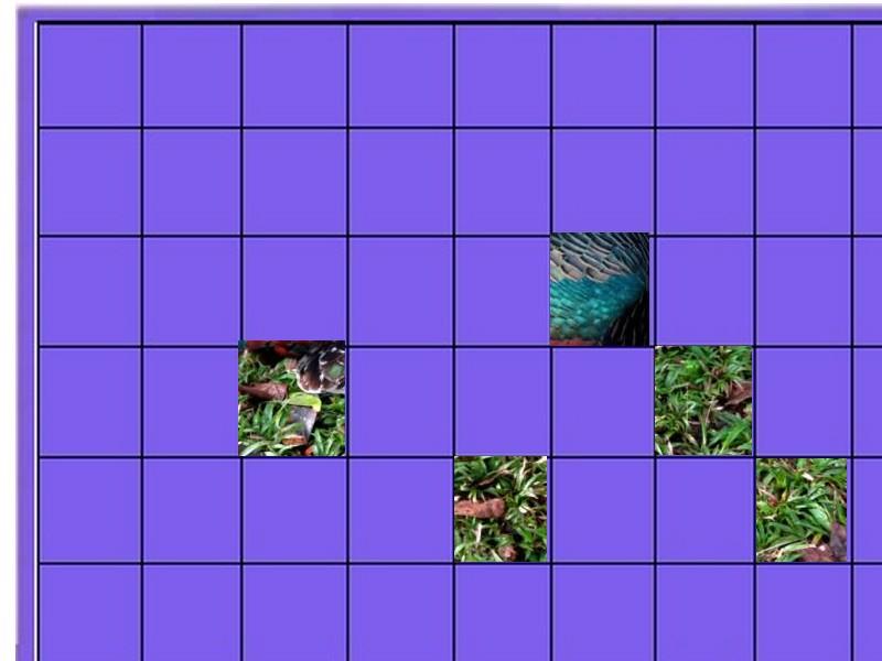 oiseau N° 1 -ajonc le 7 avril trouvé par Martine  Oiseau12