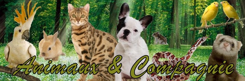 Animaux & Compagnie