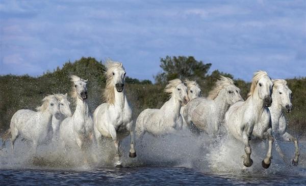 les chevaux  13370110