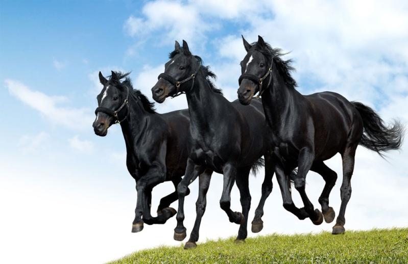 les chevaux  17289-10