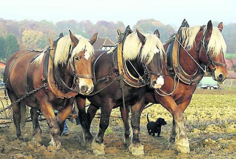 les chevaux  - Page 3 20130610