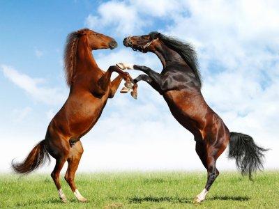 les chevaux  29913010