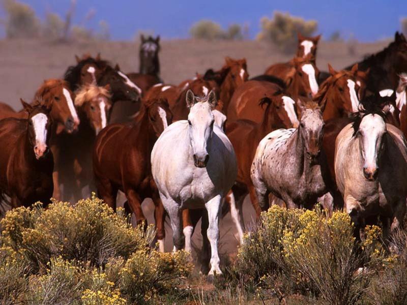 les chevaux  Iblhoz10
