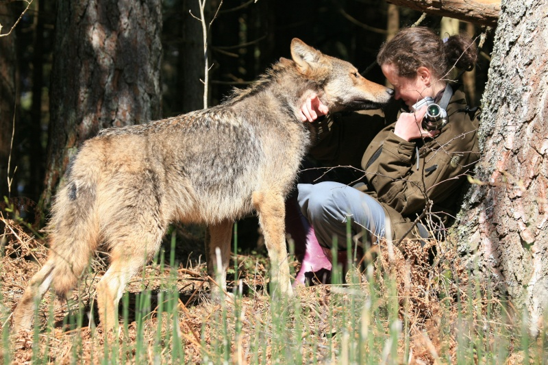 Les Loups - Page 2 Img_9710