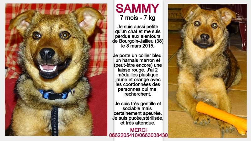 SAMMY est perdue depuis le 8 mars : secteur BOURGOIN JALLIEU 38 2010