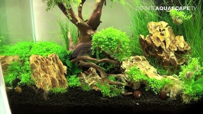 Noms de plantes Screen12
