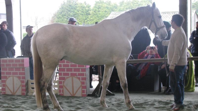 Fête équestre à Pipaix (Leuze-en-Hainaut) le 29 mars 2015 Img_0814