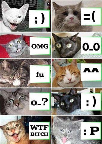 Photos rigoulotes x) - Page 5 Cats3r10