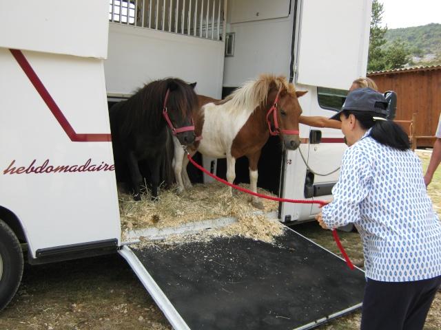 Surnoms de vos chevaux Arriva15