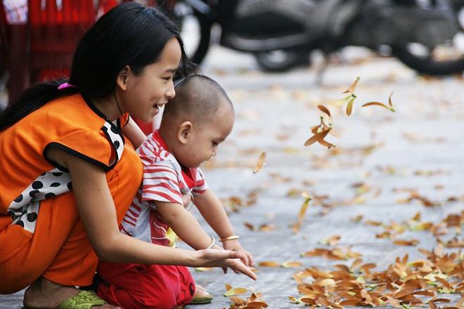 Sài Gòn mùa trái dầu bay  Dsc06112