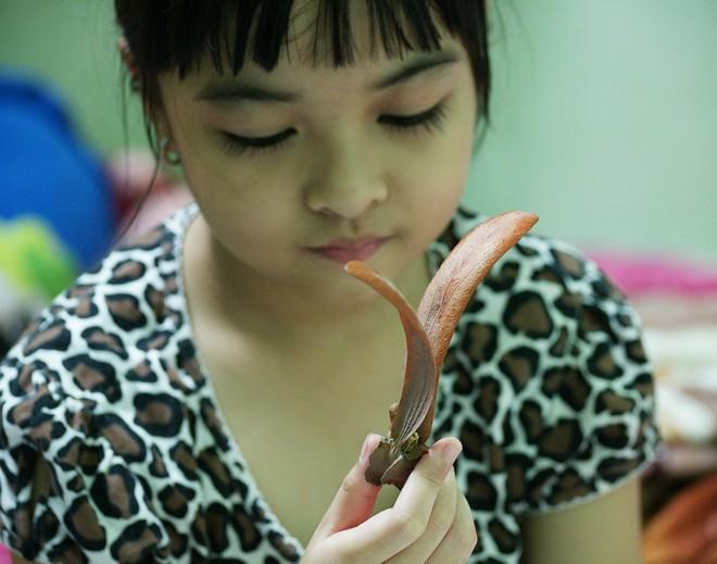 Sài Gòn mùa trái dầu bay  Dsc06514