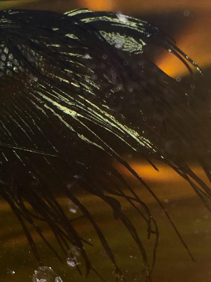 Black et champignons, c'est de l'histoire ancienne ! Image40