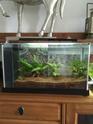 Nano aquarium Fluval Spec V 19L [mise en eau] - Page 4 Img_5810