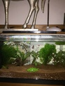Nano aquarium Fluval Spec V 19L [mise en eau] - Page 4 Img_5910