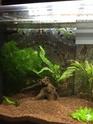 Nano aquarium Fluval Spec V 19L [mise en eau] - Page 4 Img_5912