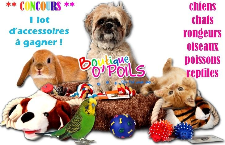 Boutique O'Poils - 5% reversé aux P'tits Korrigans - Page 3 Concou10