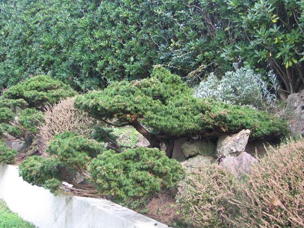 Jardin à la japonaise Jardin11