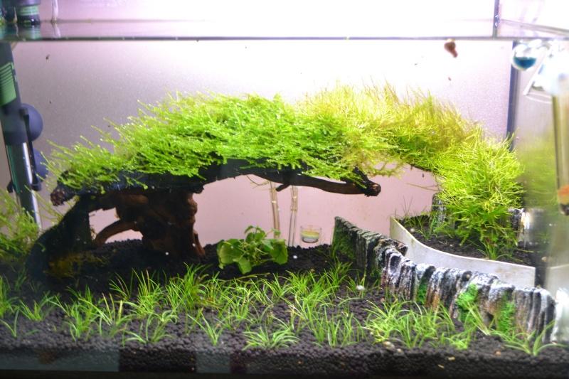 projet aquascape crevettes Dsc_0010