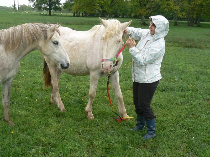 VENUS - ONC poney née en 1987 - adoptée en octobre 2012 par souris73 - Page 7 P1290810