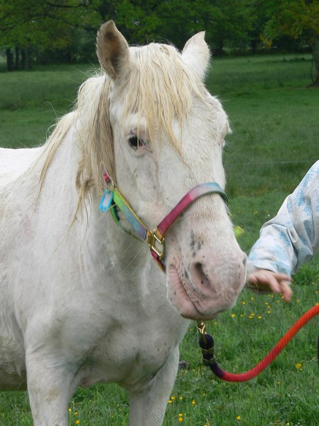 VENUS - ONC poney née en 1987 - adoptée en octobre 2012 par souris73 - Page 7 P1290812