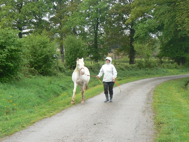 VENUS - ONC poney née en 1987 - adoptée en octobre 2012 par souris73 - Page 7 P1290910