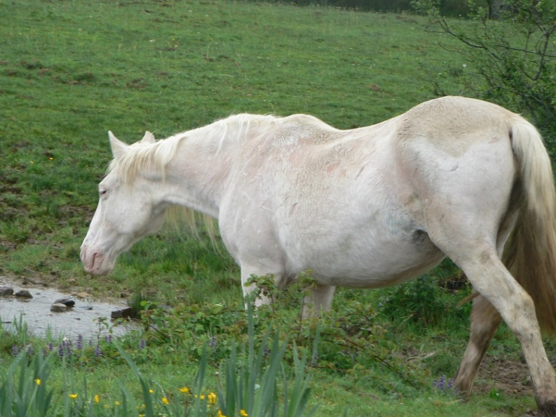VENUS - ONC poney née en 1987 - adoptée en octobre 2012 par souris73 - Page 7 P1290911