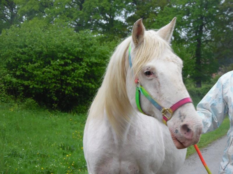 VENUS - ONC poney née en 1987 - adoptée en octobre 2012 par souris73 - Page 7 Sam_1810