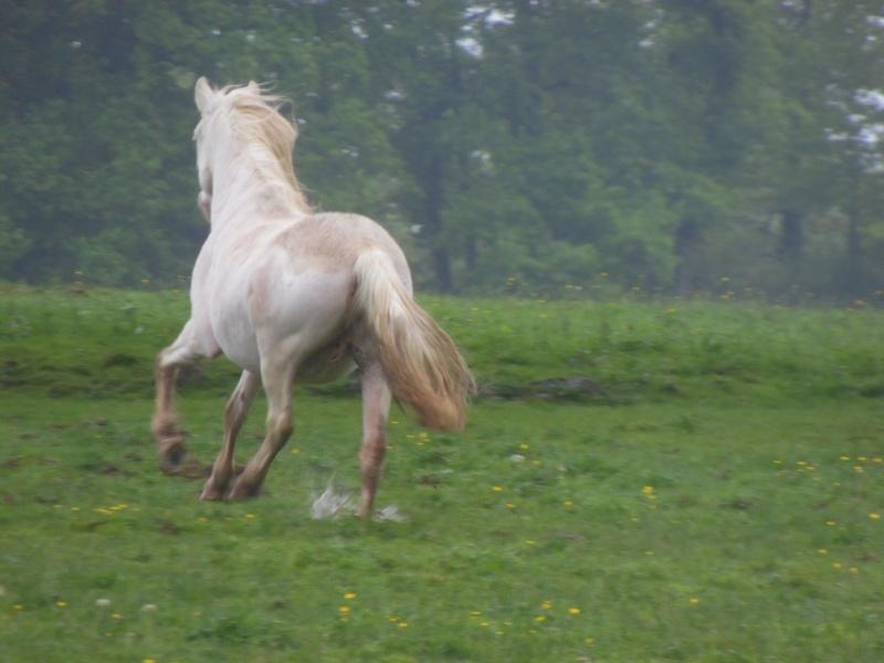 VENUS - ONC poney née en 1987 - adoptée en octobre 2012 par souris73 - Page 7 Sam_1811