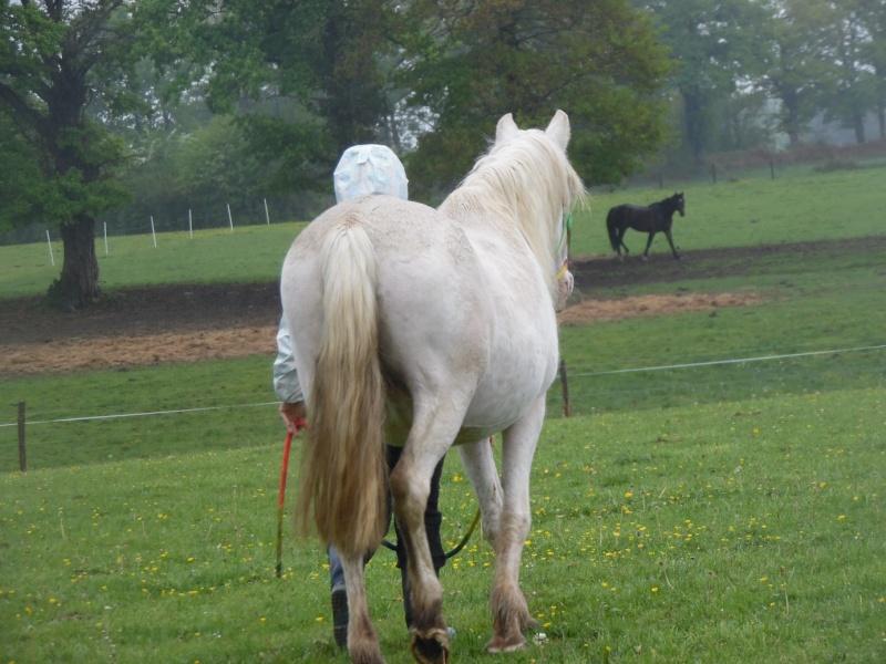 VENUS - ONC poney née en 1987 - adoptée en octobre 2012 par souris73 - Page 7 Sam_1812